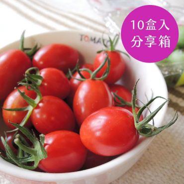 有機玉女小番茄-分享箱
