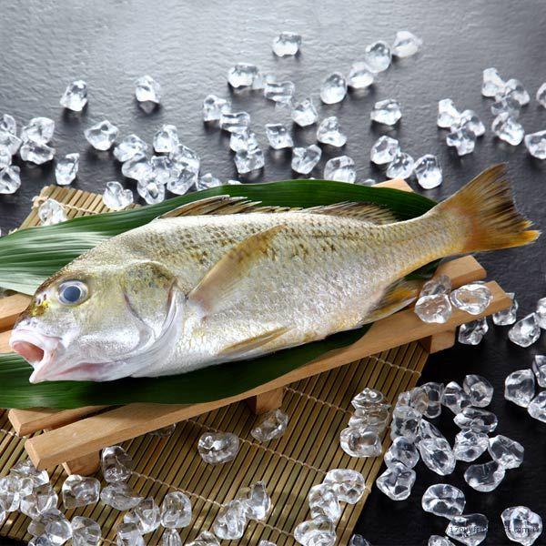 星雞魚(台牙魚)/700-800克(尾)