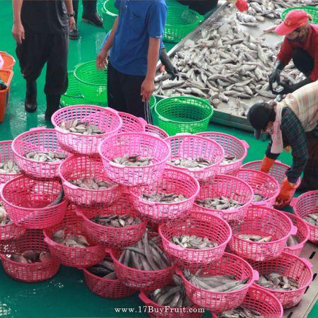 乾淨的漁貨捕撈環境